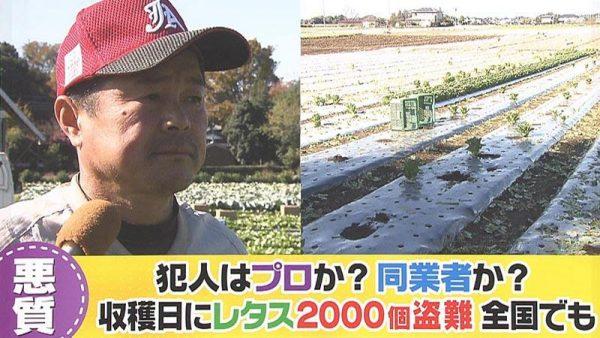 農作物盗難
