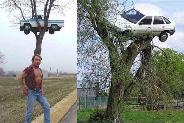 樹の上の車